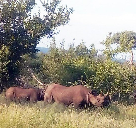 Black Rhino near the open vehicle.