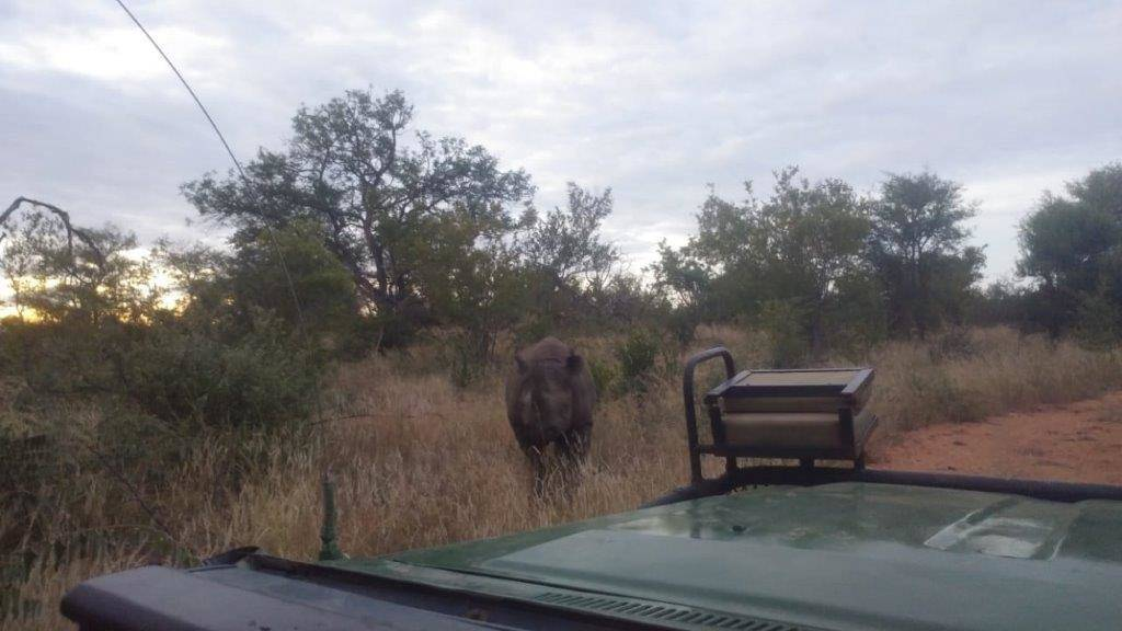 Black Rhino investigates Bernard's open Landcruiser