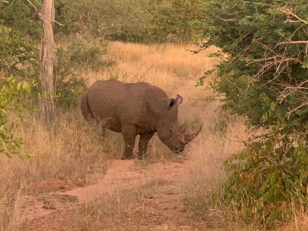 White Rhino at Tremisana Lodge