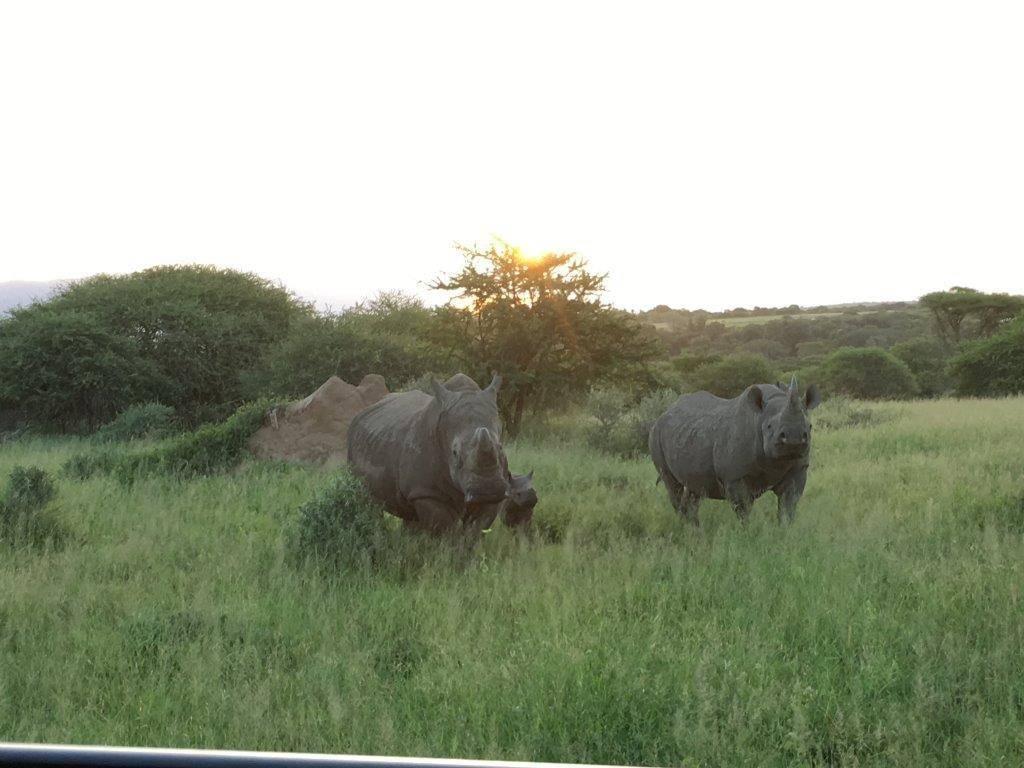 Unusual photo of White Rhino bull near Black Rhino cow and calf