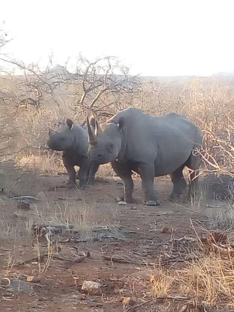 Good shot of Black Rhino near our vehicle