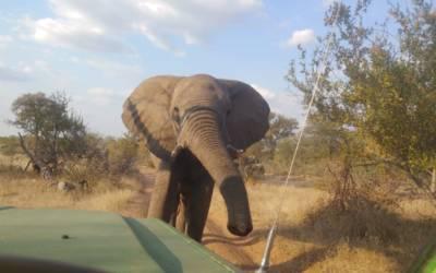 Bernard falling in love with elephants