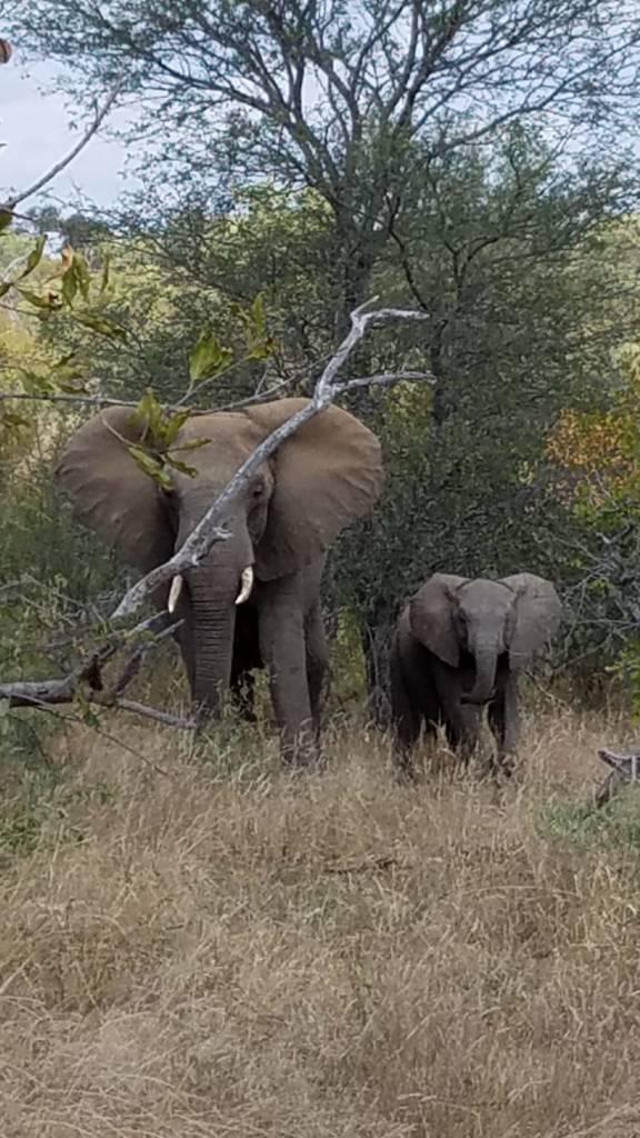 Good study of elephants