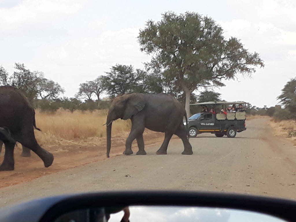 Elephants in between the Viva vehicles