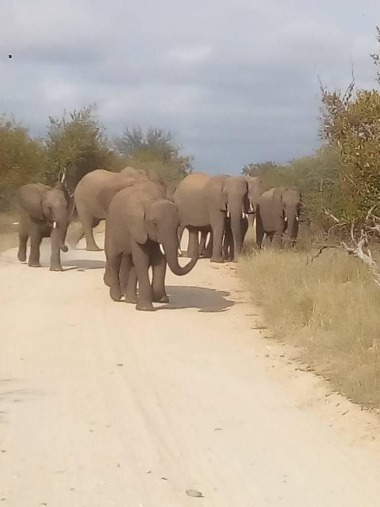 Elephants seen on Bush Walk