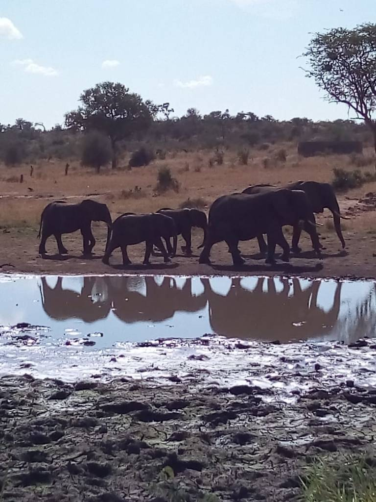 Great photo of elephants and their reflections