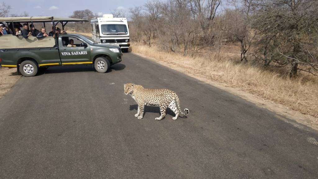 This leopard was crossing the road about 7km from Orpen reception. Ernest and I were very lucky to be there at the right time.