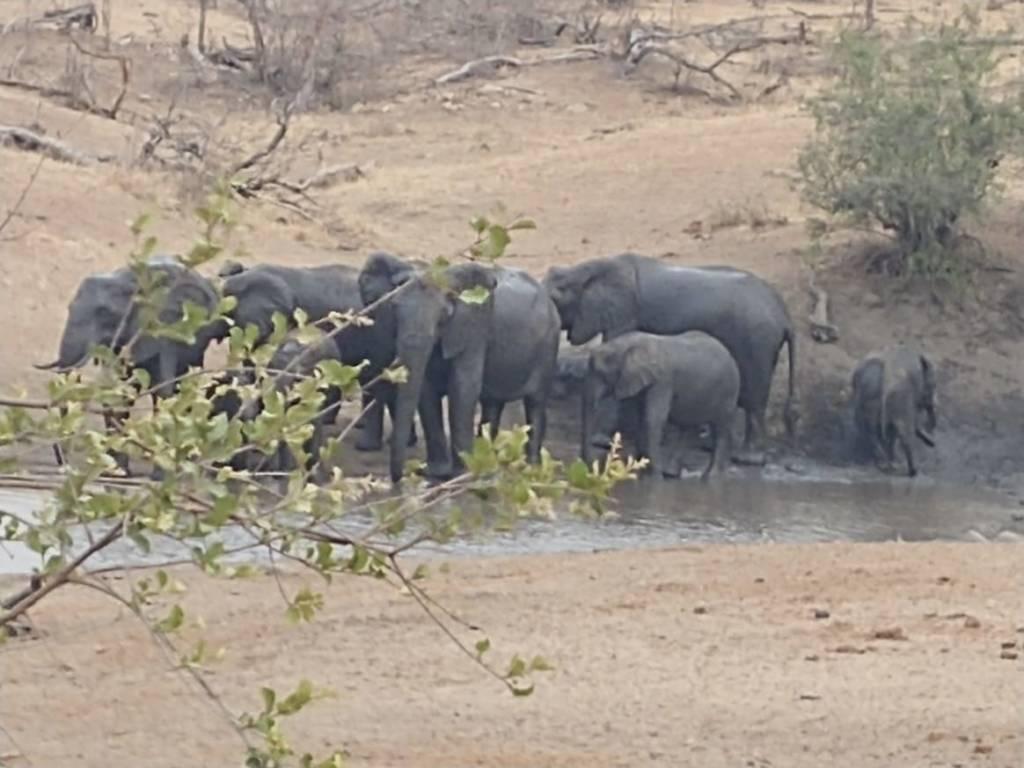 Elephant herd at Tremisana Dam