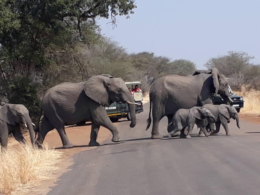 Elephant herd obscures Viva vehicles