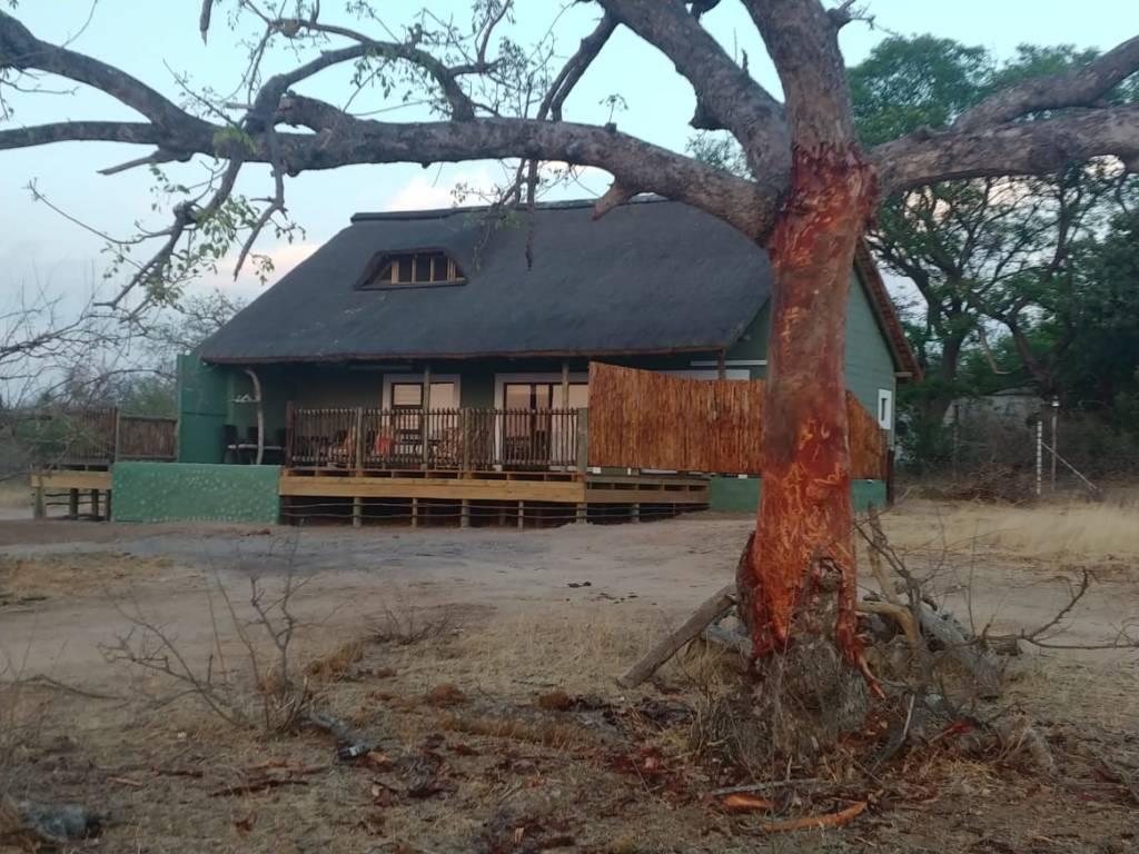 Ring barked Marula Tree at Tremisana