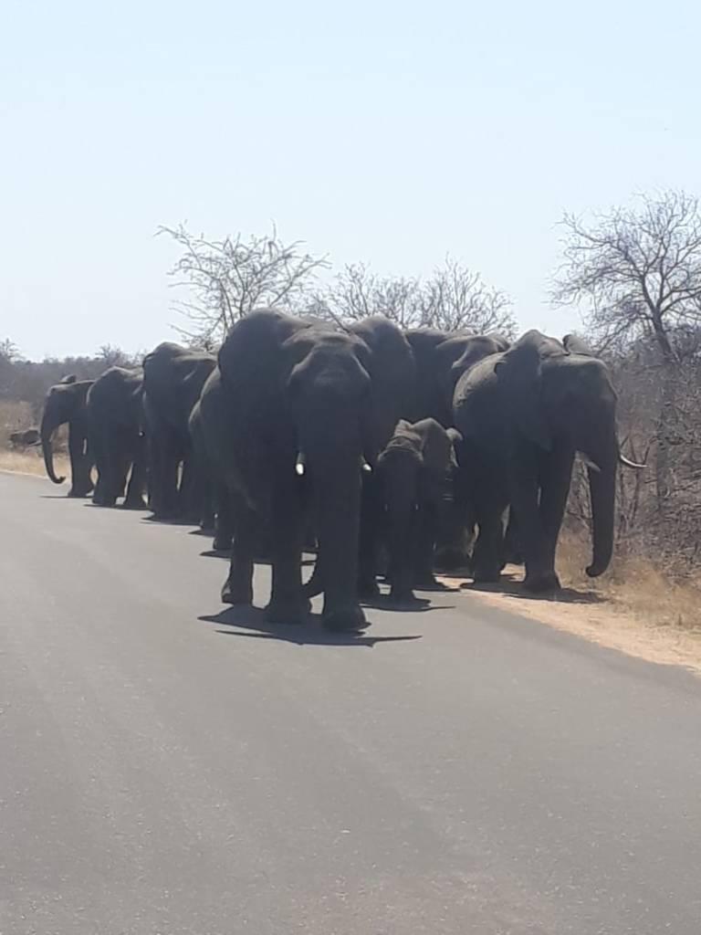 Massive herd of elephants passing our open vehicle
