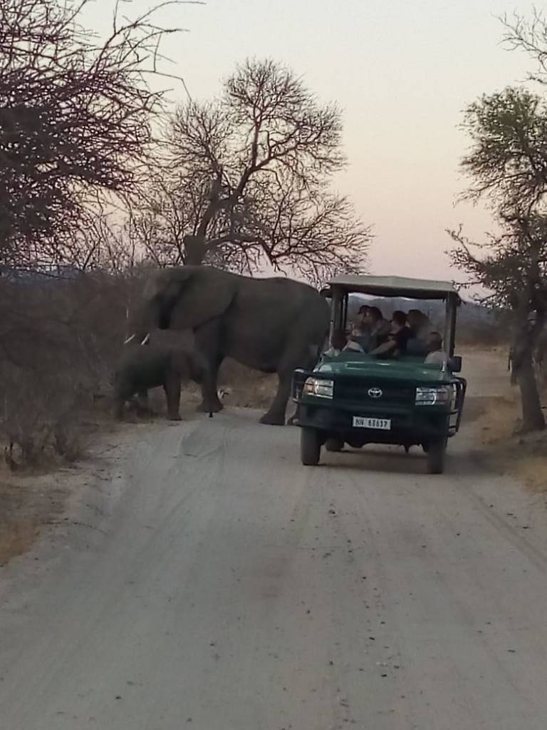 Raymond close to elephants