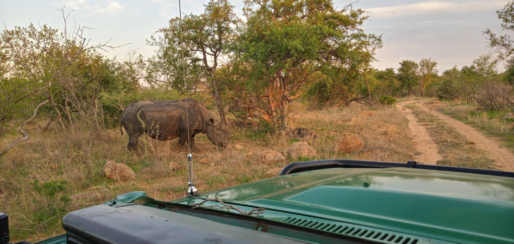 Black Rhino near Bernard's Landcruiser