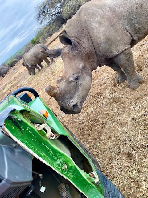 White Rhino near Charl's Landcruiser