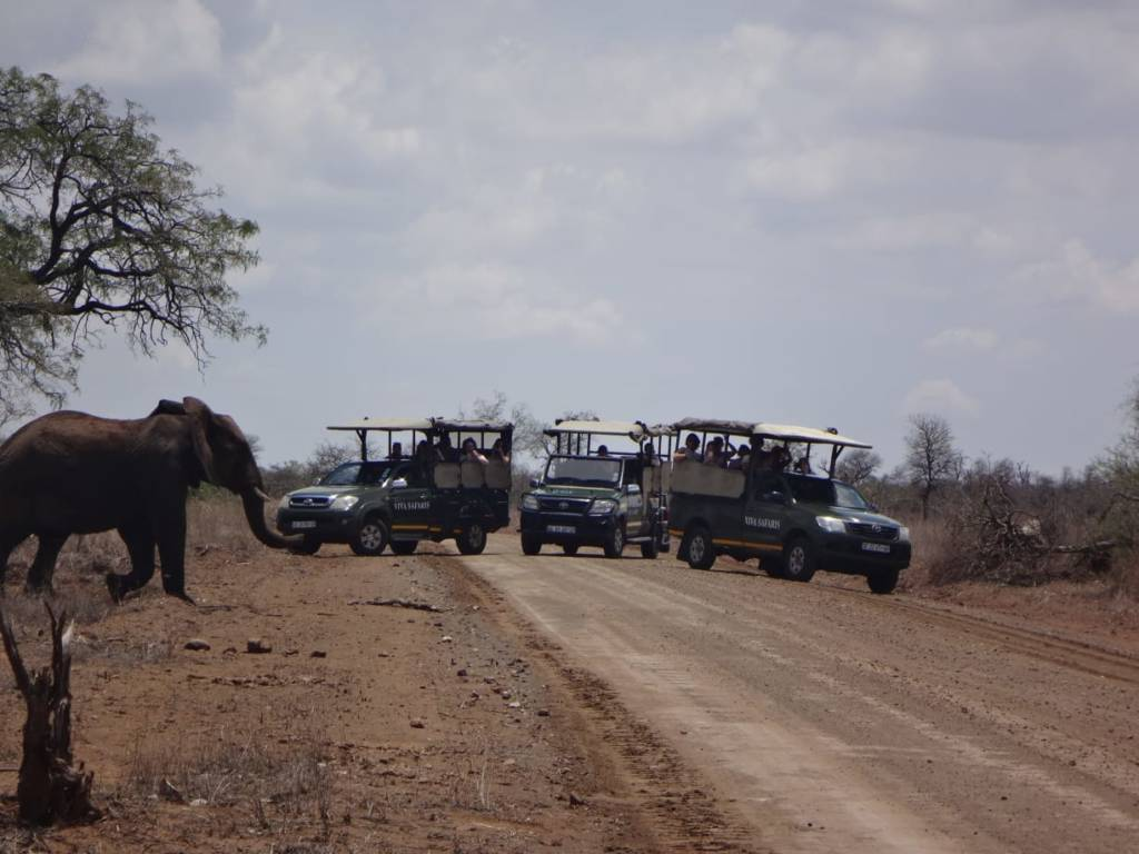 Elephant crossing the road in front of excited Viva guests