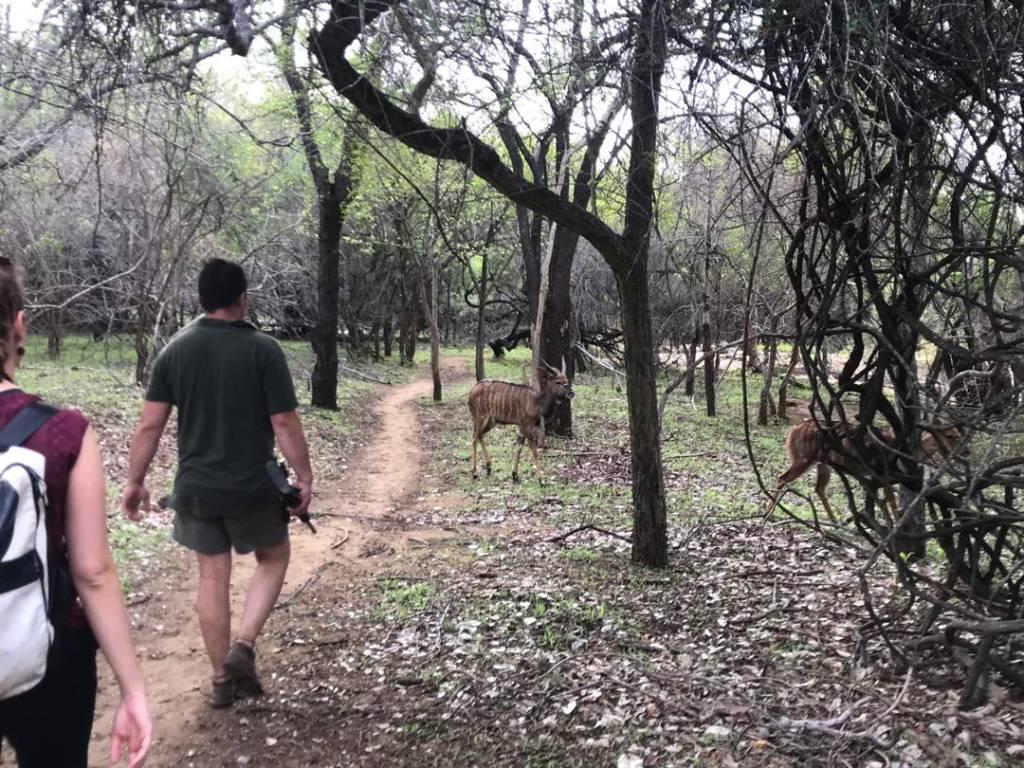 Jordan leading bush walk among young nyala bulls
