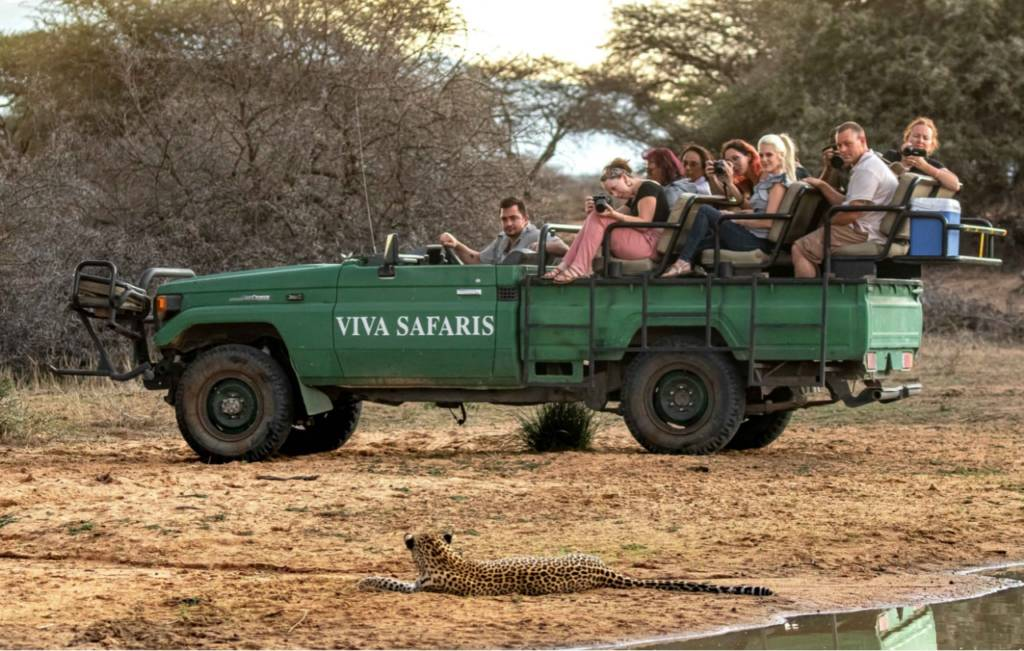 Relaxed Motlala leopard looking at Jordan and guests