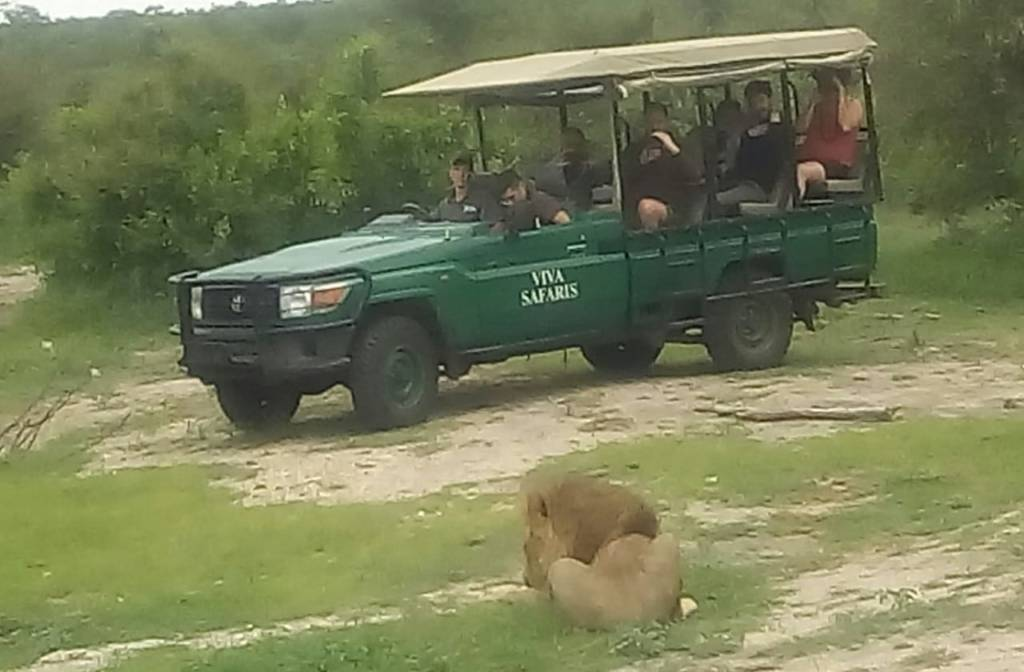 Bernard, not to be outdone, gets guests close to lion