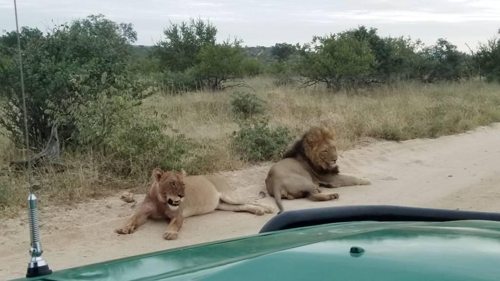 Lions near my Cruiser