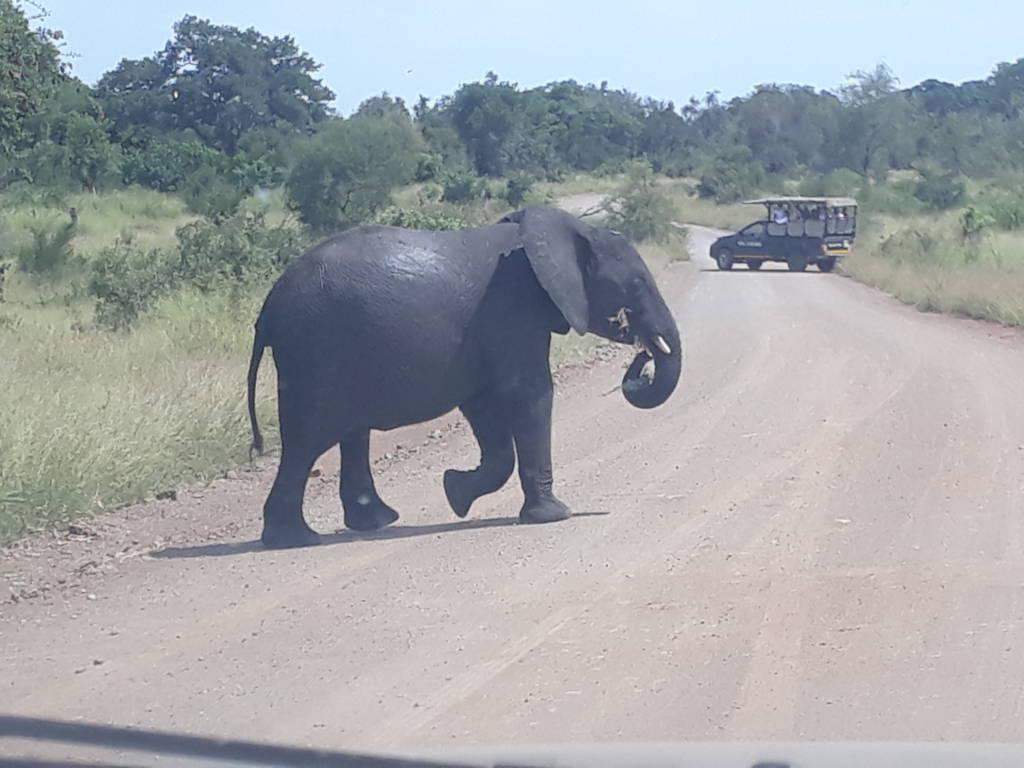 Elephant near Nsemani Dam